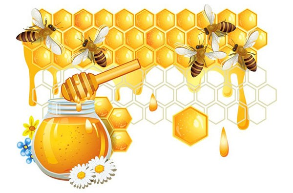 Полезен ли мёд при диете для похудения