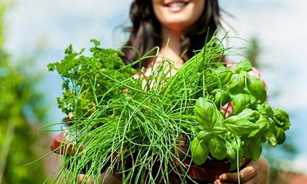 Мочегонные травы для снятия отеков