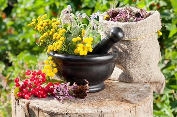 Травы для похудения сжигающие жир, сбор трав отзывы об эффективных травах