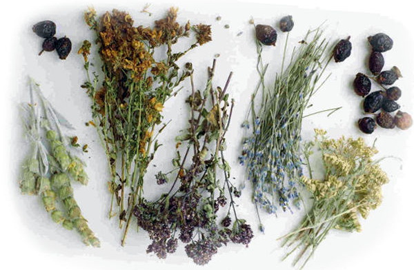 Лекарственные травы – лучшие помощники для тех, кто мечтает похудеть