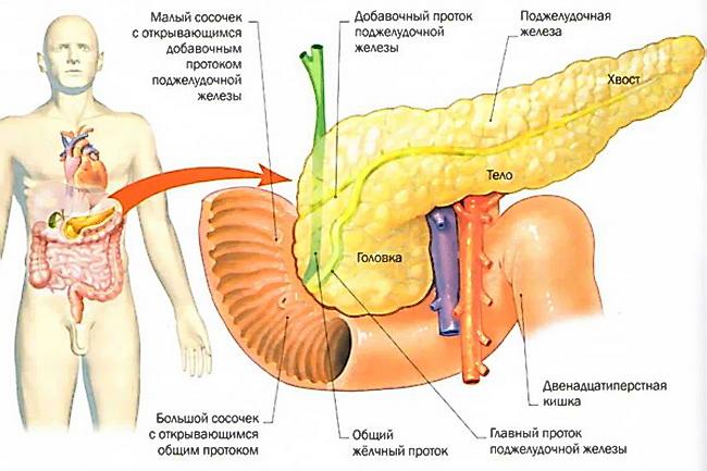 Заболевания поджелудочной железы: симптомы, лечение, диета