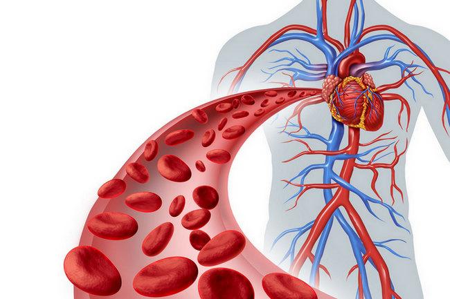Как очистить кровь от инфекций