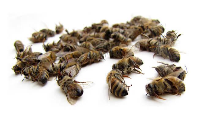 Капли пчелиный спас эффективен ли уникальный состав с подмором для похудения?