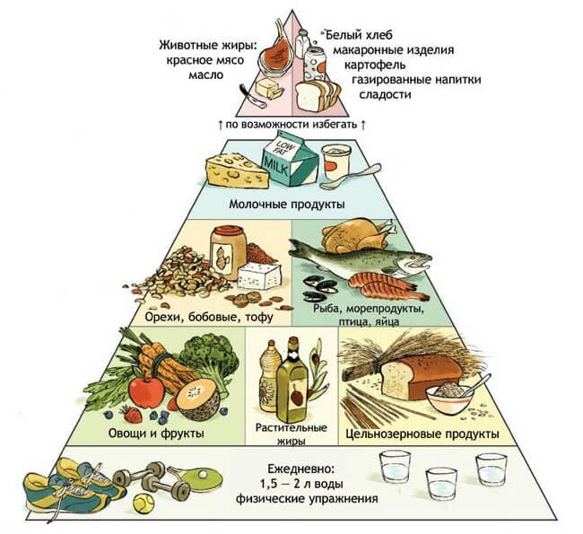 Гарвардская пирамида