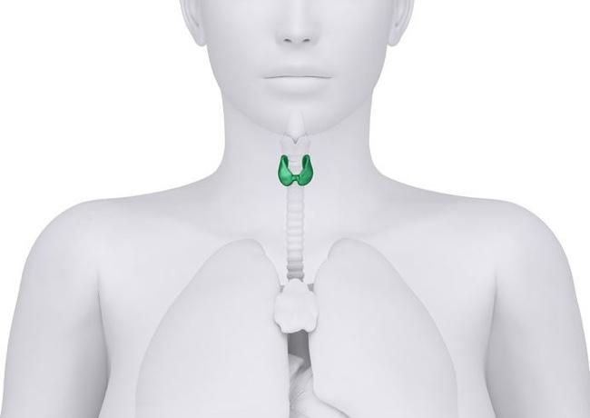 Как похудеть при проблемах с щитовидной железой