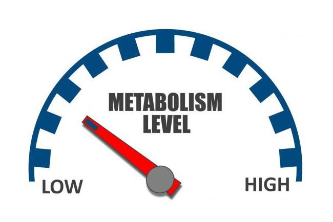 Что собой представляет враг похудения №1 всё о медленном метаболизме и его последствиях