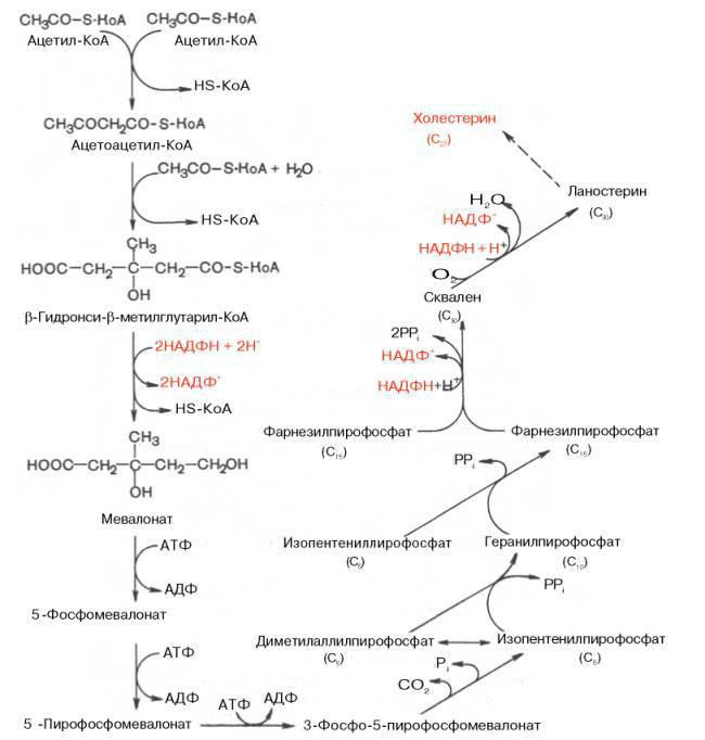 Схема синтеза холестерина