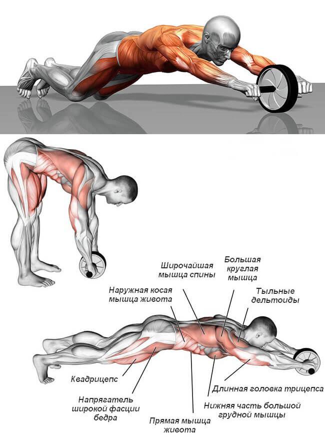 Мышцы задействованы при работе с роликом